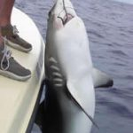 Shark Catch in Bahamas