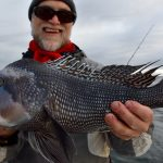 Cape Cod - Black Sea Bass Catch