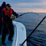 Multiple Fishermen Fishing Tuna