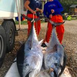 Two Bluefin Tuna