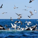 Sea Gulls Surrounding Whales