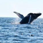 Whale Dive Fin Close Up