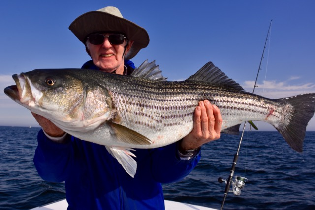 Man holding striped bass in cape cod reel deal fishing for Striper fishing cape cod