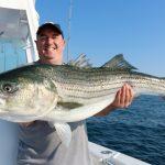 Huge Striped Bass Catch