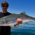 Man Holding Medium Striped Bass