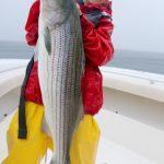 Very Long Striped Bass