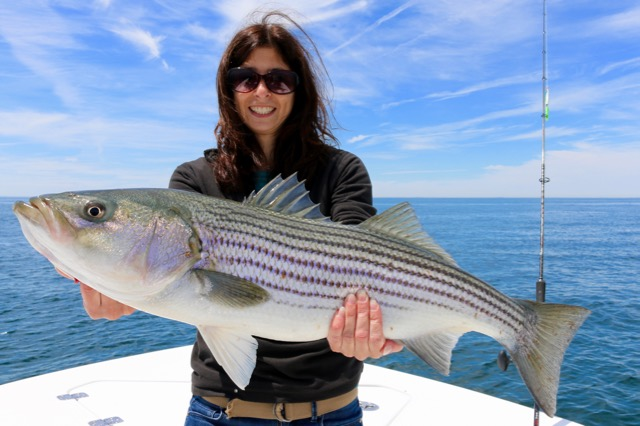 Woman with truro striped bass reel deal fishing charters for Striper fishing cape cod