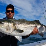 Large Cape Cod Striped Bass Catch
