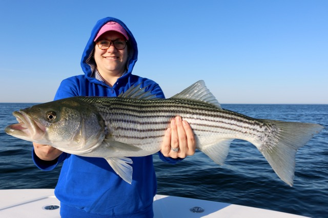 Fisherman with truro striped bass reel deal fishing charters for Striper fishing cape cod