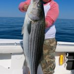 Large Truro Striped Bass