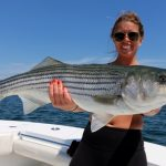 Medium Truro Striped Bass