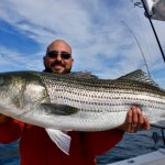 Large Cape Cod Large Striped Bass Catch
