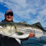 Large Cape Cod Large Striped Bass Catch being Held