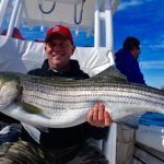 Large Cape Cod Striped Bass Catch being Held