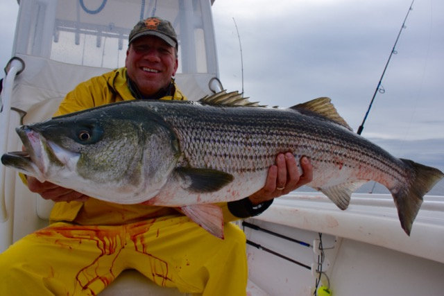 Man with his striped bass catch reel deal fishing charters for Striper fishing cape cod