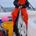 Medium Cape Cod Tuna Catch