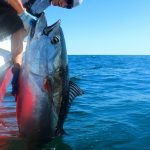 Fisherman Lifting Large Tuna Aboard
