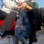 Large Cape Cod Tuna with Lure