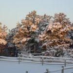 Snowy Morning - Reel Deal Fishing