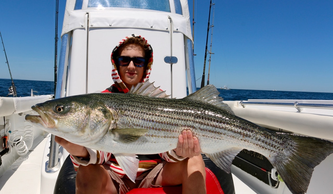 Striped bass fishing guides