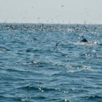 Cape Cod Whale Watching and Sea Life