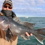 Cape Cod Deep Sea Fishing Black Sea Bass