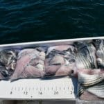 Fishing in Massachusetts Striped Bass and Sea Bass