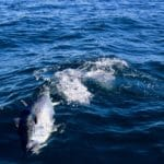 Massachusetts Deep Sea Fishing Bluefin Tuna